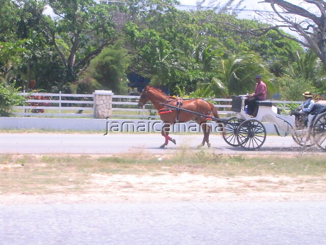 Horse and buggy by jamaicamama