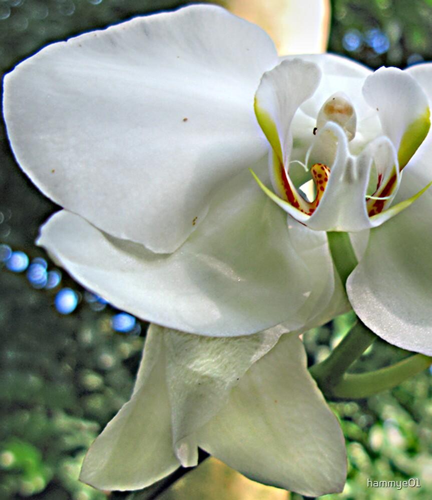 Orchid by hammye01
