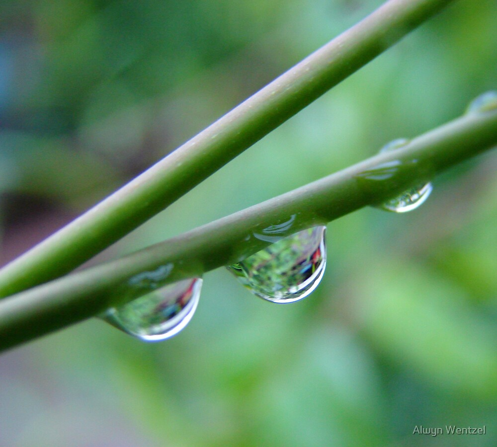 Droplets by Alwyn Wentzel