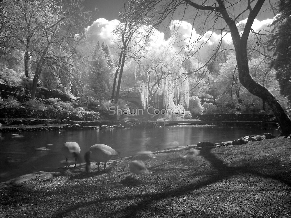 I Dream of Geese by Shawn Cooney