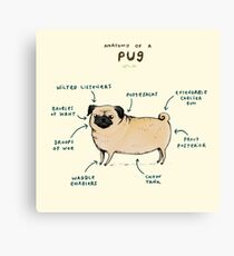 Anatomy of a Pug Canvas Print