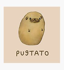 Pugtato Photographic Print