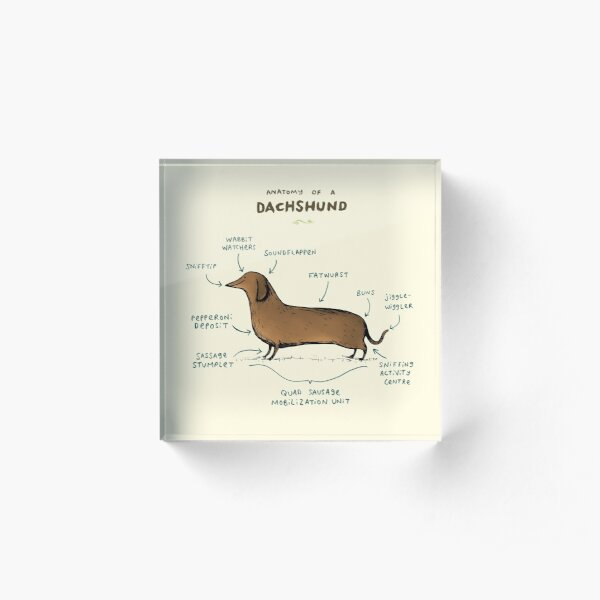 Anatomy of a Dachshund Acrylic Block