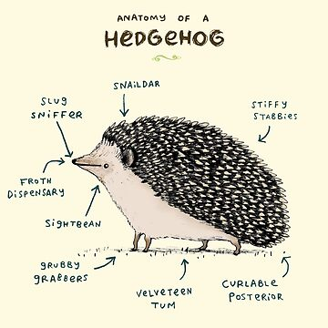Anatomy of a Hedgehog by SophieCorrigan
