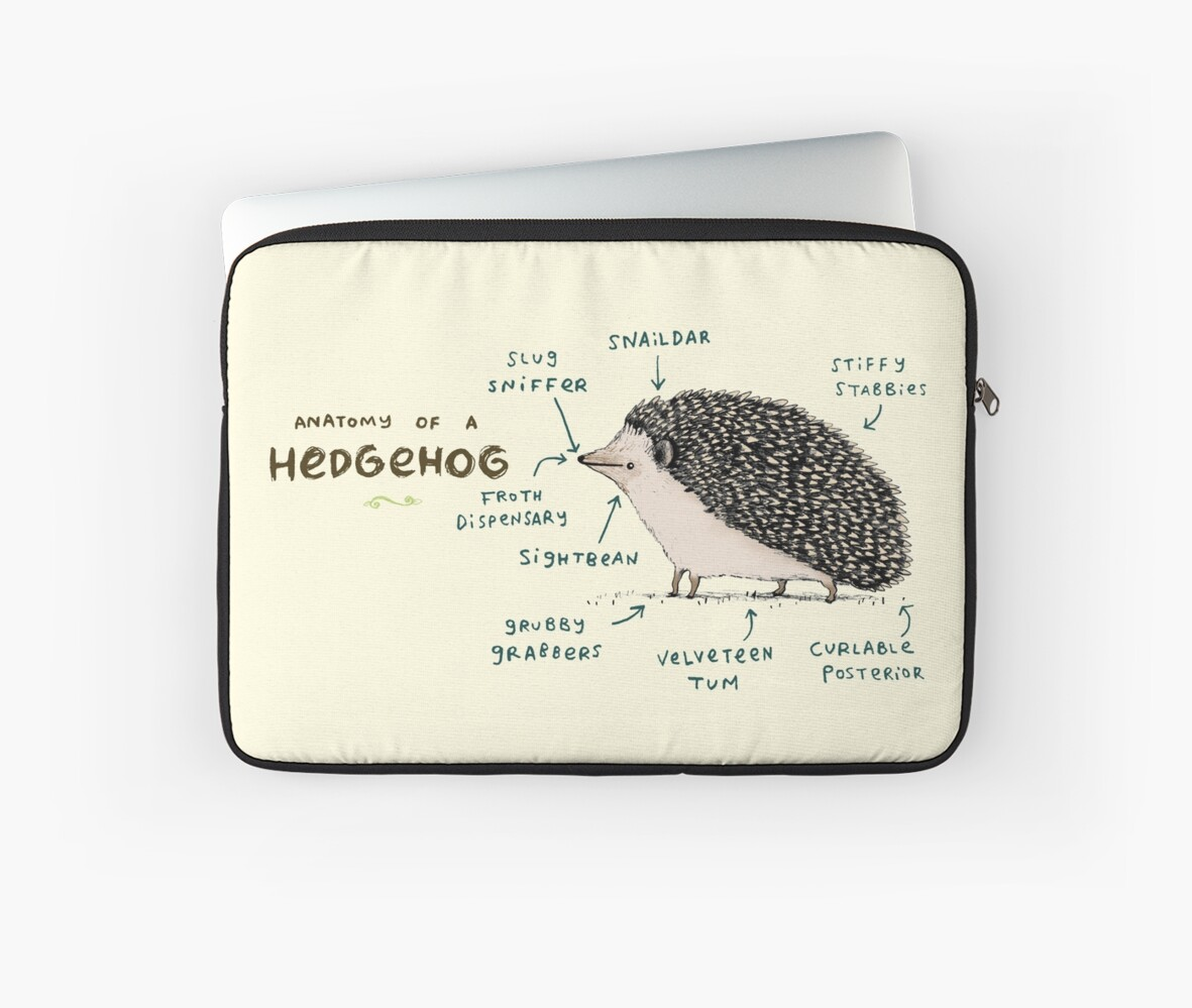 Anatomy of a Hedgehog\