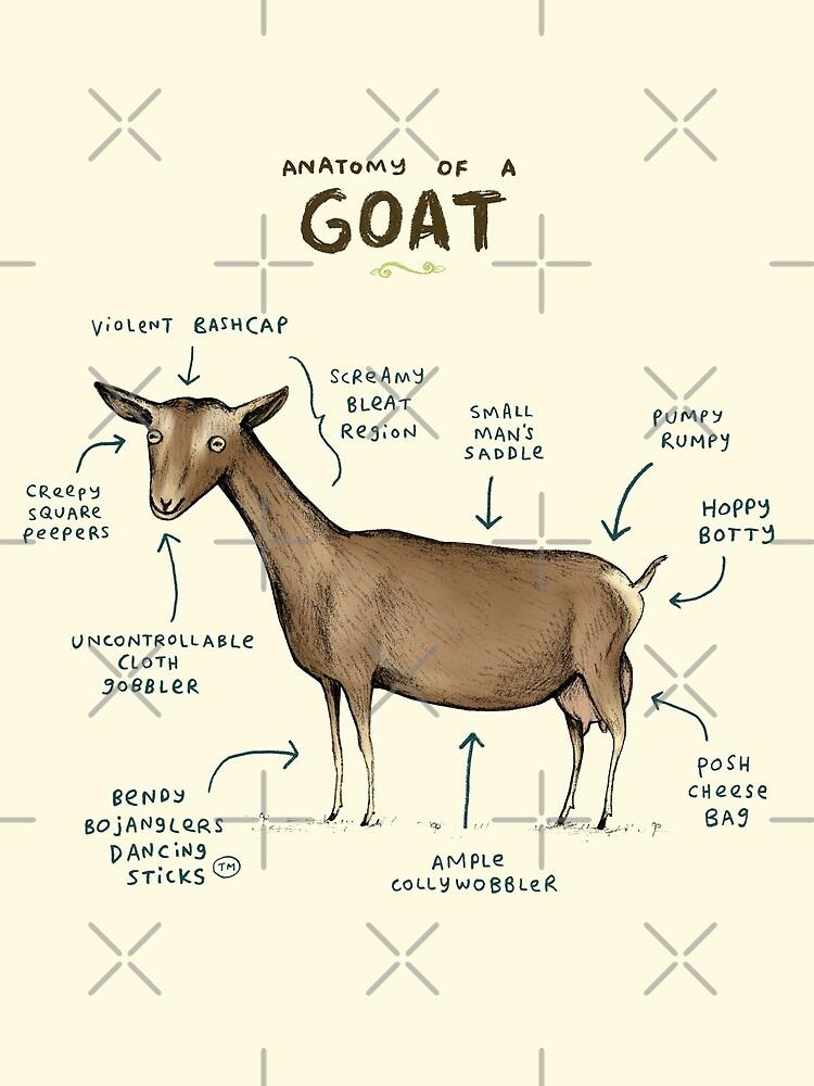 Anatomie einer Ziege von SophieCorrigan