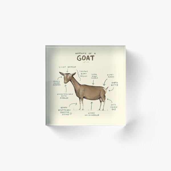 Anatomy of a Goat Acrylic Block