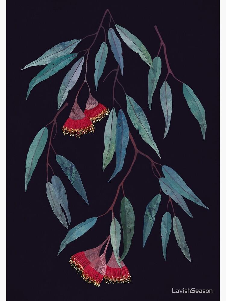 Eucalyptus leaves and flowers on dark by LavishSeason