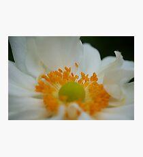 Macro Flower 5  Photographic Print