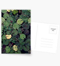 Seerosen Postkarten
