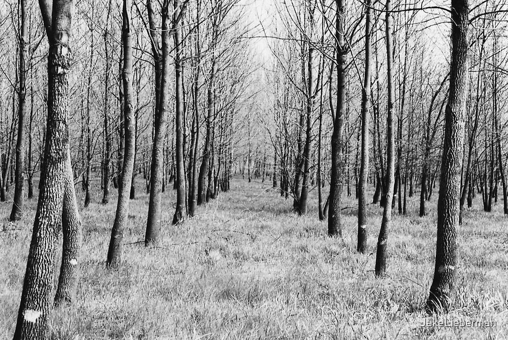 Tree Symmetry by JakeLieberman