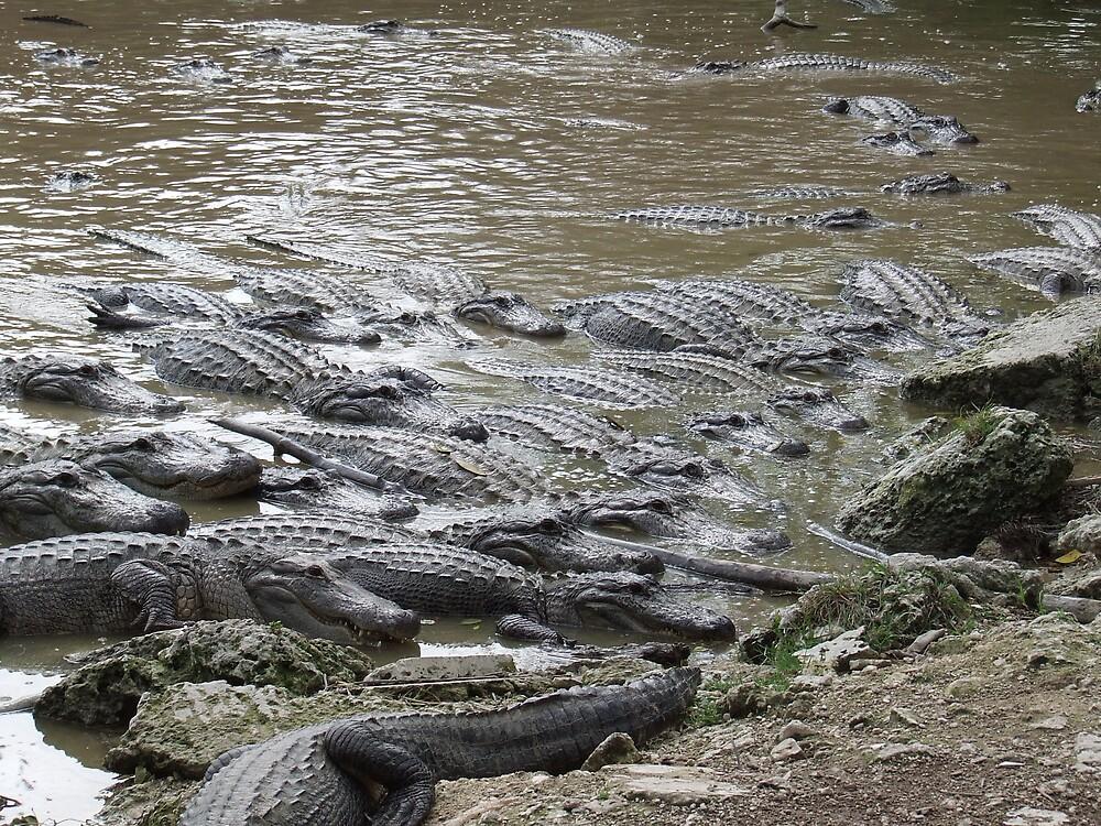 Croc city by charleycan