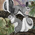 Two Abert Squirrels by Walter Colvin