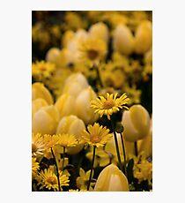 Pushing daisies Photographic Print