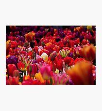 Warm tulips Photographic Print