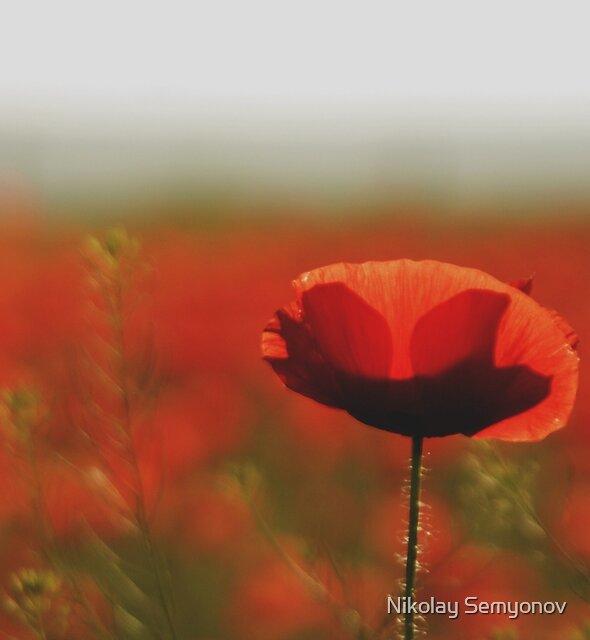 Poppy Fields near Odessa by Nikolay Semyonov