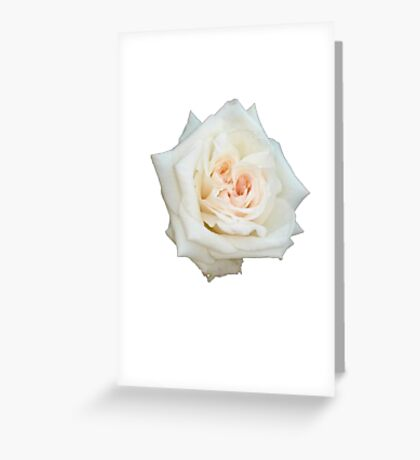 Close Up View Of A Beautiful White Rose Isolated Greeting Card