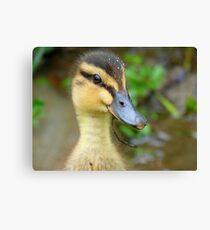 Have YOU Twigged On Yet? - Mallard Duckling - NZ Canvas Print