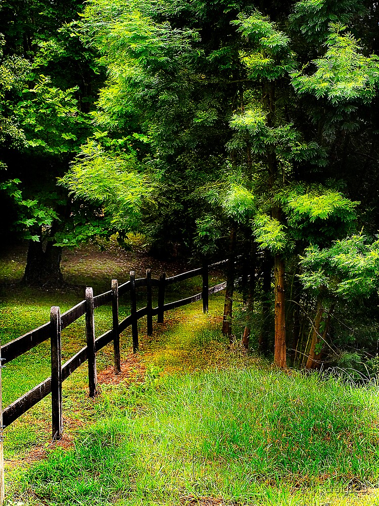 Down the fence line by craig123