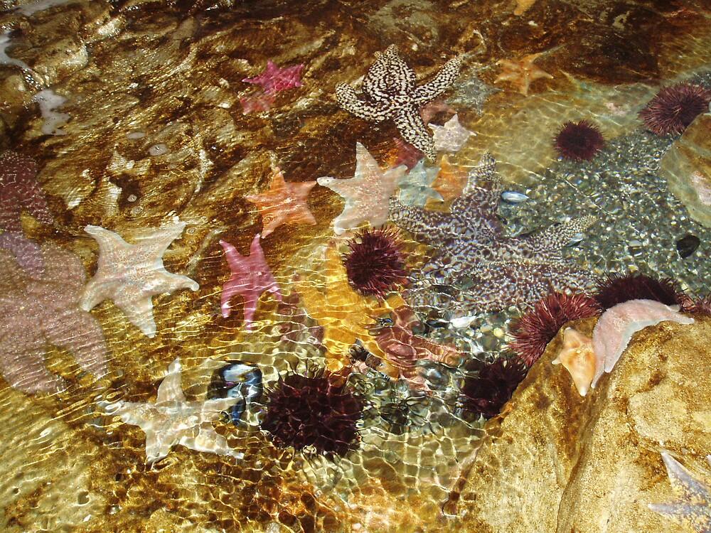 Starfish by Kathleen Madrid