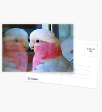Mirror Mirror on the wall... Galah - NZ - Southland Postcards