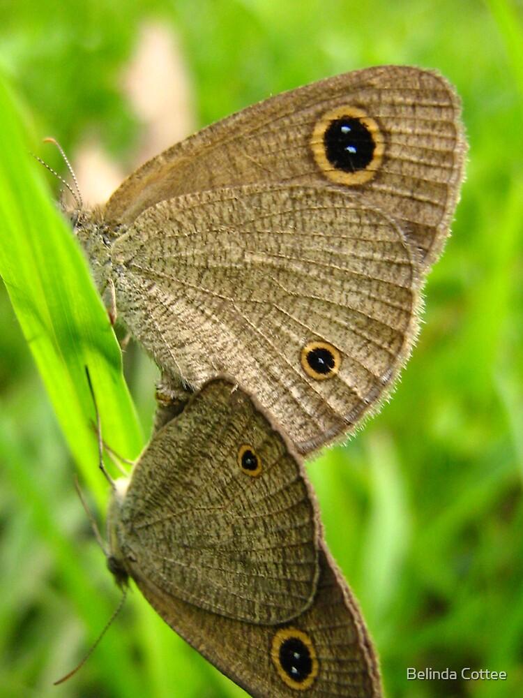 moths mating by Belinda Cottee