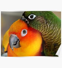 Hang On... Yip... I Got That Nasty Little Pin... - Conures - NZ Poster