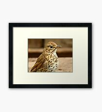 I'm As Beautiful As My Song Is..! - Song Thrush - NZ Framed Print