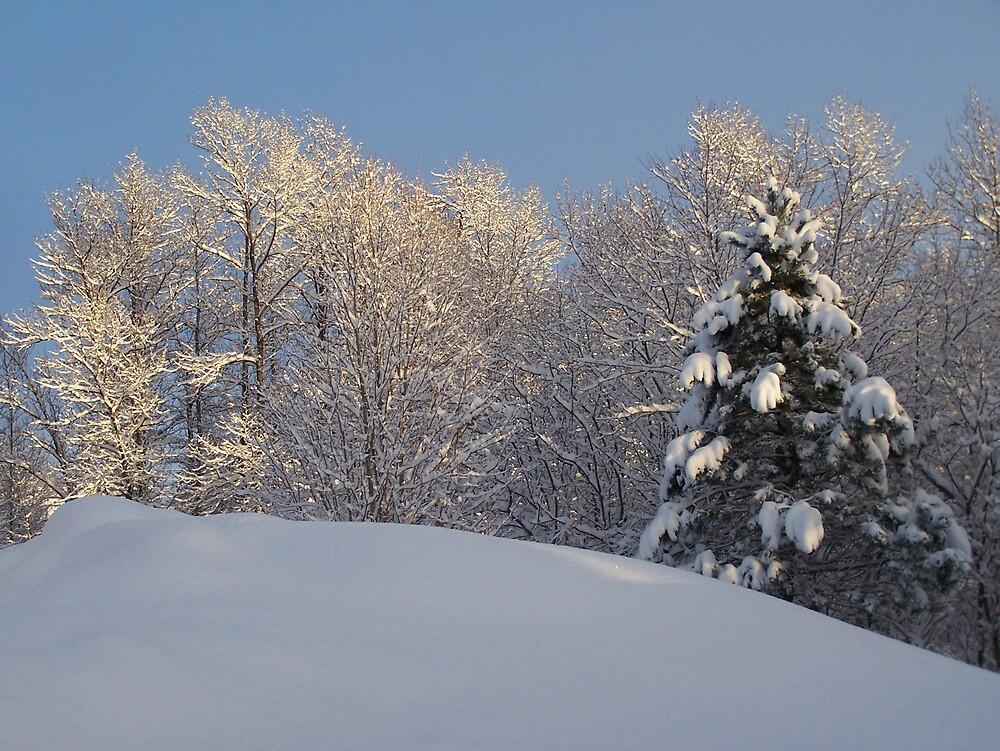 Sun On Snow by Gene Cyr