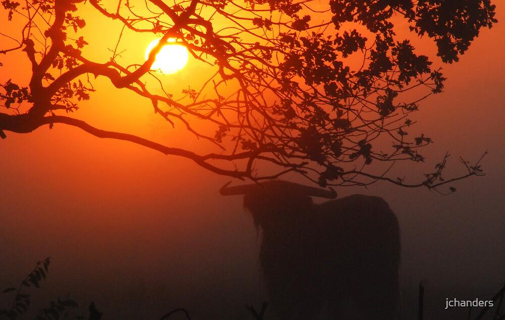 Africa-like adventures on Hilversum heath by jchanders