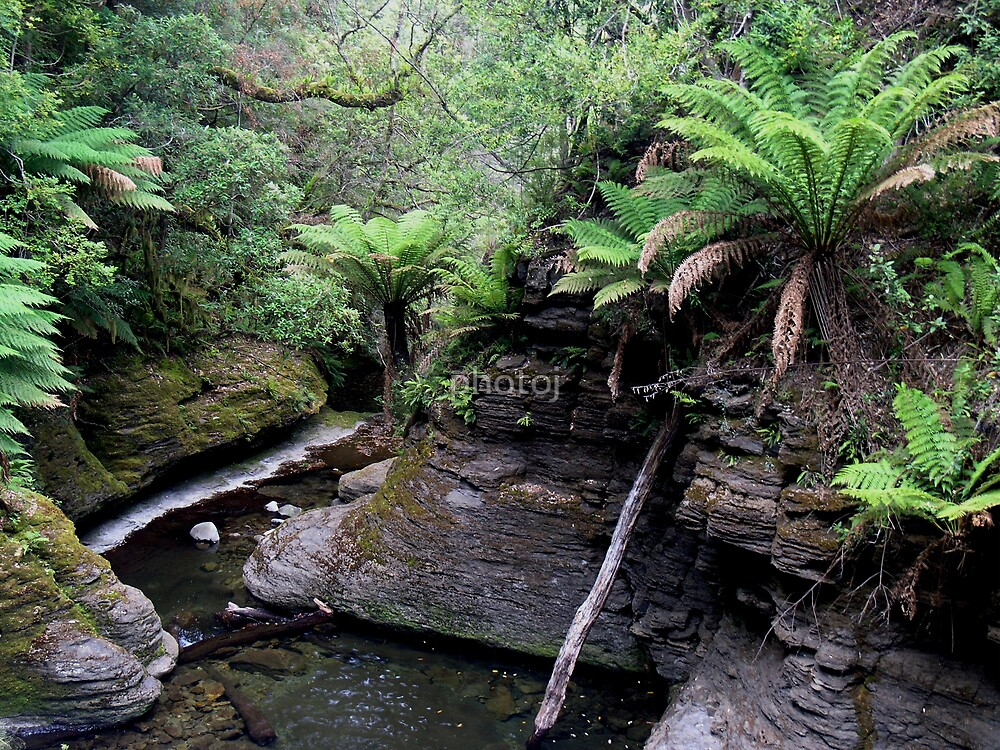 photoj Tas Liffy Falls Reserve by photoj