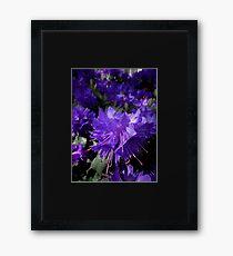 West Coast Gardens: Amethyst Azaleas Framed Print