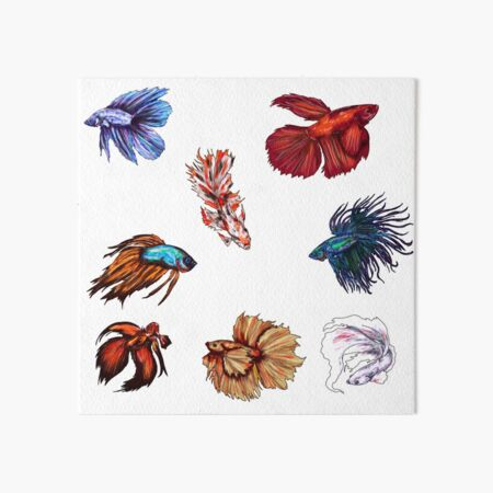 Betta fishes Art Board Print
