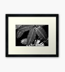 """""""Touch-me-not""""... Framed Print"""