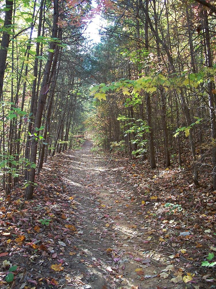 Path Thru the Trees by islandpainter