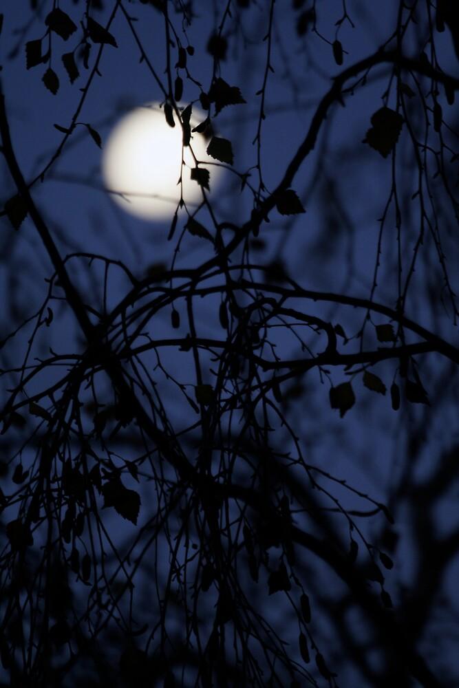 Taroona Moon by johneb