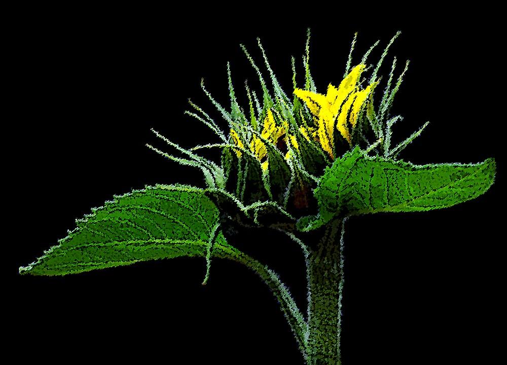Sunflower2 by Ken  Aitchison