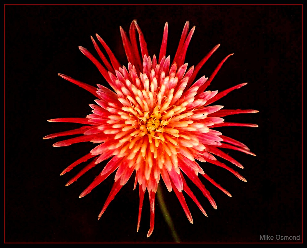 Starburst! by MikeO