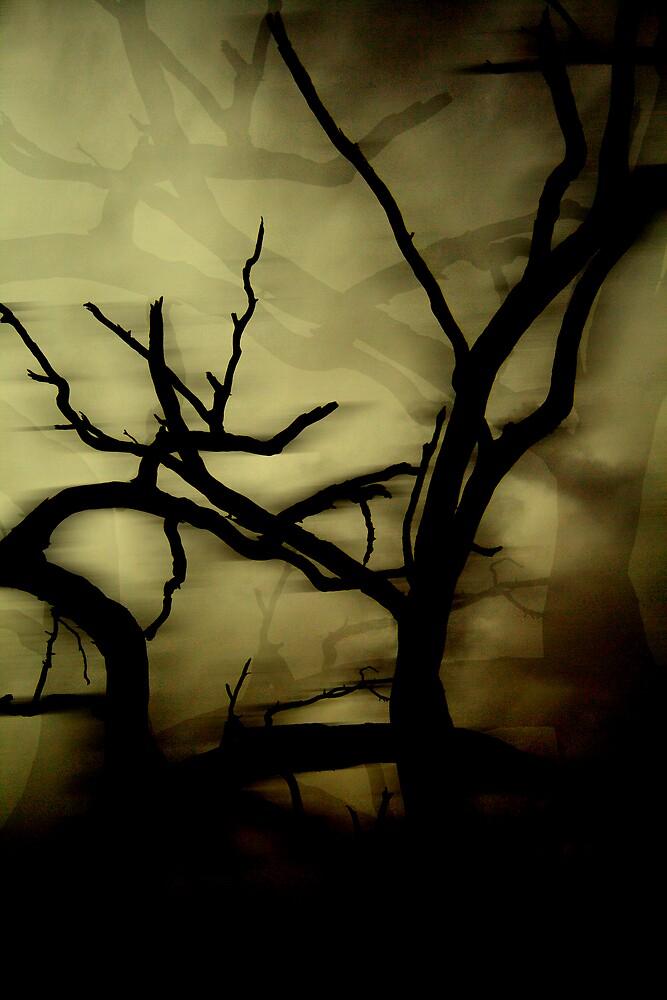 Parched Ghost by Belinda Fraser