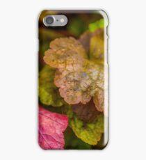 Heuchera Green Spice iPhone Case/Skin