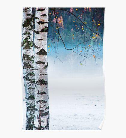Birches in the mist Poster