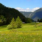 Spring on the Alps by annalisa bianchetti