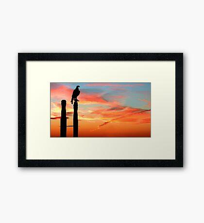 Perched Eagle at Sunset Framed Print