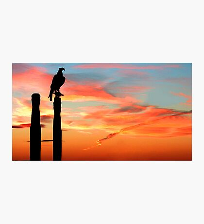 Perched Eagle at Sunset Photographic Print