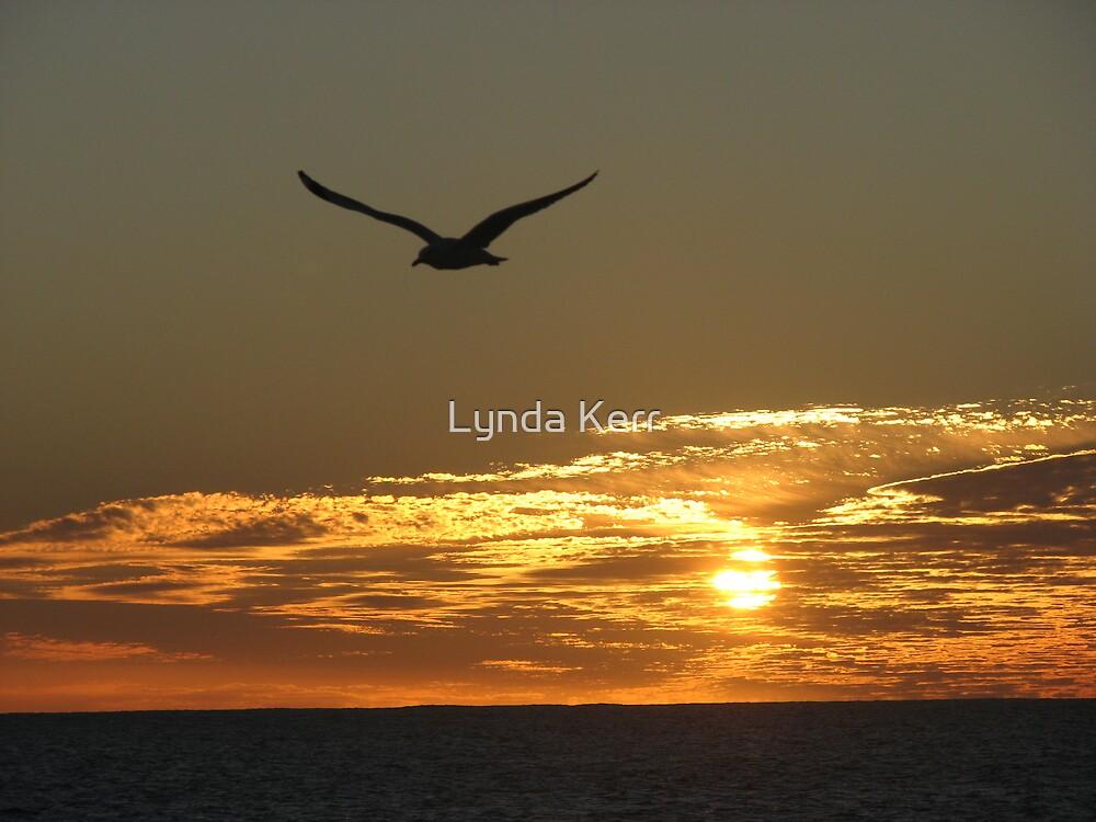 Homeward Bound by Lynda Kerr
