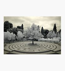 The White Tree of Gondor Photographic Print