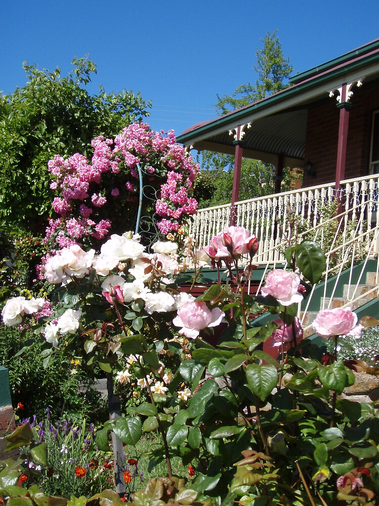 fragrant cottage garden by gaylene
