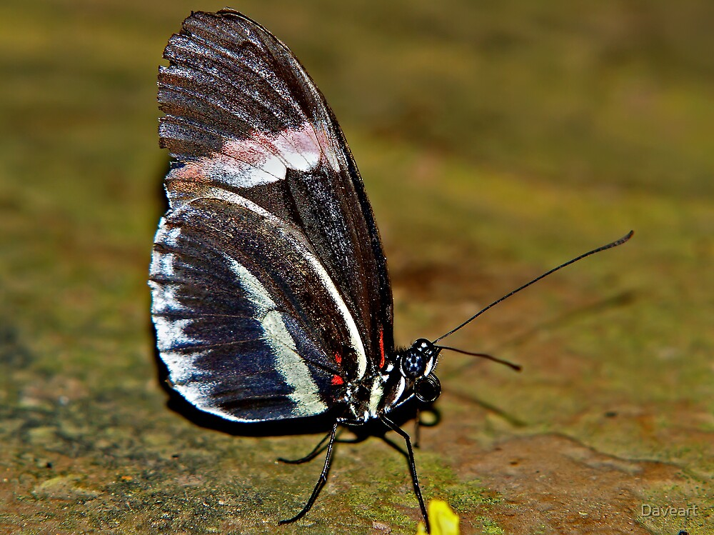 Tropical butterfly by Daveart