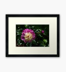 And Finally A Touch of Sun Framed Print