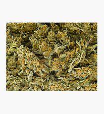 cannabis Photographic Print